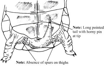 mcs2 caresheet for mediterranean tortoises spur thighed tortoise
