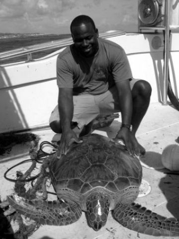 Carlos Sasso of the Department of Fisheries and Marine Resources, Anguilla, with a sub-adult green turtle caught using the BCG-funded turtle net.