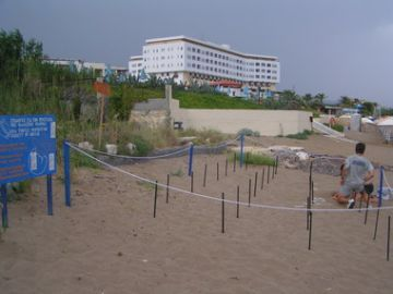 Rethymno nesting beach and natural hatchery