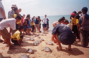 Sea Turtle releasing ceremony at Phra Thong island 2002, Thailand.