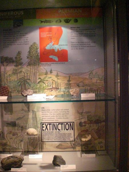 Fig. 3. The time line display at Haslemere Educational Museum showing the late Permian mass extinction.