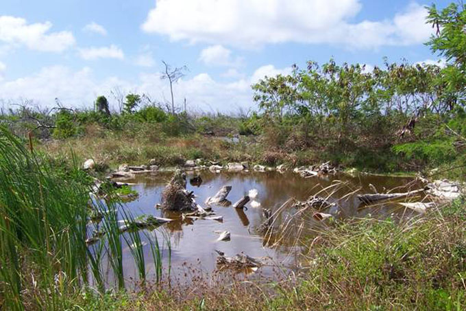 Fig. 4. Pond with denser marginal vegetation.