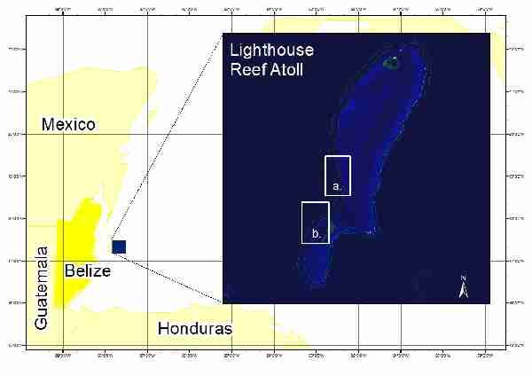Fig. 1. Study sites at Lighthouse Reef Atoll, Belize: a) 'Central LRA' and b) 'Long Caye'. (Adapted from Google Earth)