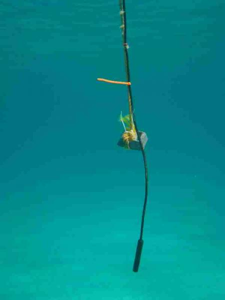 Fig. 2. Omnidirectional hydrophone in the water.