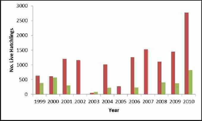 Fig. 10. Showing estimated number of live green and loggerhead hatchlings at Akrotiri 1999-2010. Red bars show estimated total number of live loggerhead hatchlings. Green bars show estimated number of live green hatchlings.